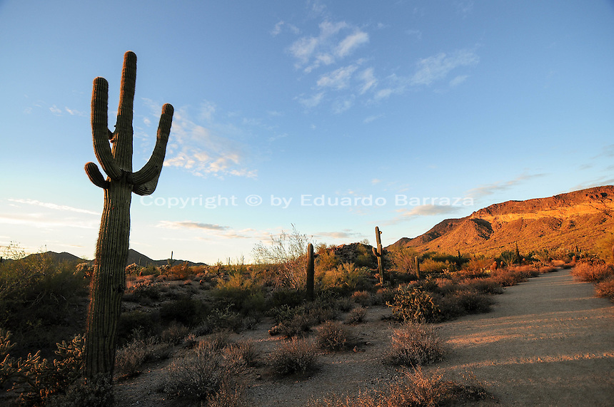 Mesa, Arizona. A view of the Usery Mountain Regional Park at the Merkle Memorial Trail. The sunset light baths the mountain and cacti on this summer's afternoon. Photo by Eduardo Barraza © 2015