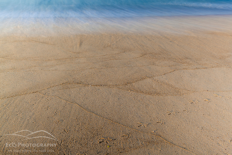 Heron tracks in the sand at South Beach on Martha's Vineyard, Massachusetts.