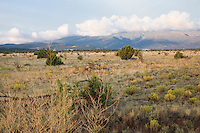 High Plains short grass prairie native meadow xeric landscape of pinyon juniper savanna near Santa Fe, New Mexico