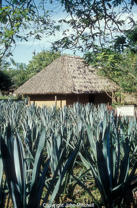 Reconstruction of an ancient Mayan building at Joya de Ceren archaeological site, El Salvador, Central America
