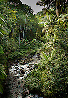 Tropical river views along the Hamakua coast along with Hawaiian tropical forests and streams and native landscape.