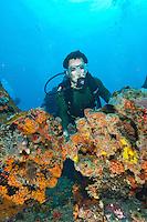 Wreck of the General Rogers<br /> U.S. Virgin Islands