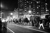 Elephants stroll through Washington, DC at night.