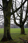 Europe, UK, England, Hertfordshire, Bushey. Bare trees and grass.