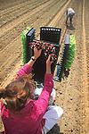 Farming: Planting