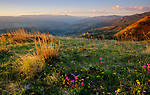 Idaho, North Central, Cottonwood. A spring morning with wildflowers on a ridge overlooking the Salmon River and canyon near White Bird, Idaho.