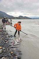 Personal use dipnet fishery, Copper River, Chitina, Alaska.