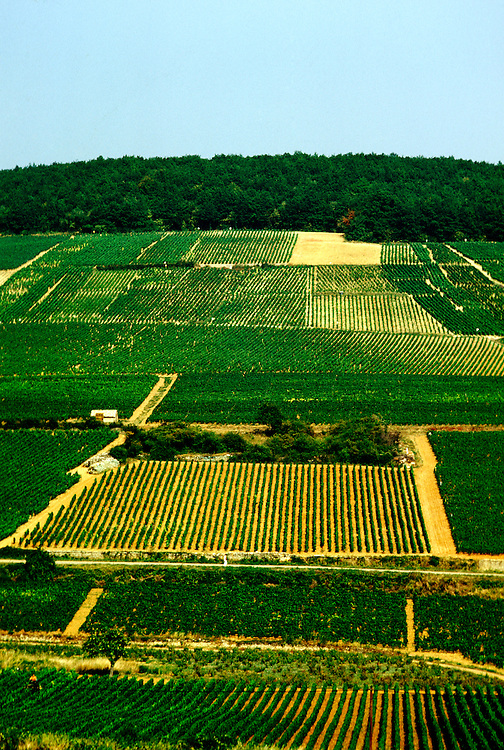 France: Typical Burgundy vineyards north of Beaune..Photo Copyright Lee Foster, 510/549-2202, lee@fostertravel.com, www.fostertravel.com...Photo #: frburg102