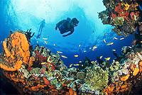 Snorkeler at Life's Reef.U.S. Virgin Islands