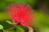 Colorful flowers.St John, Virgin Islands