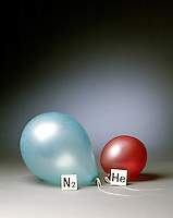 HELIUM &amp; NITROGEN FILLED BALLOONS (5 of 5)<br /> The Two Balloons After 48 Hours<br /> After 48 hours the helium filled balloon is smaller than the nitrogen filled balloon. Helium effuses out of the balloon faster than nitrogen.  Light atoms or molecules effuse through the pores of the balloons faster than heavy atoms or molecules.
