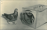 BNPS.co.uk (01202 558833).Pic: StewartWardrope/BNPS..***Please use full byline***..Pigeon carrier - Every RAF aircraft carried at least one plucky pigeon on each flight...Valuable bravery medals awarded to a flock of wartime homing pigeons have come to light to reveal the ingenious ways the British went about spying on the enemy...The birds were strapped in mini-parachutes and placed in small crates that were dropped behind enemy lines in order for the French Resistance to use...A corkscrew fan on the wooden crate unwound in the wind leading to the door to open.automatically in mid-air, allowing the pigeon to drop to the ground...The French attached coded messages about German military movements to the birds which flew across the English Channel with the precious intelligence...But one chilling note that has emerged after 70 years was written in German and informed the British the French recipient had been shot for spying having been found with a pigeon...Some 32 racing pigeons were awarded the prestigious Dickin Medal - the animal version of the Victoria Cross - for their acts of heroism in World War Two...The Royal Pigeon Racing Association owns five of them. Its general manager, Stewart Wardrope, took them along to the BBC's Antiques Roadshow to show them off...He also revealed the stories behind their award as well some of the other madcap inventions made by British boffins and used to gather intelligence using the birds...These included a clockwork camera strapped to the belly of a pigeon that automatically took reconaissance snaps of Nazi-occupied Europe before returning home...Of the five medals due to be featured on this Sunday's Antiques Roadshow, two were awarded to pigeons that delivered important intelligence from Europe six times between them...Another, named 'Beachcomber', brought back the first news of the disastrous landings at Dieppe in September 1942.