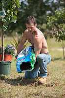 gardener pouring topsoil for the planting of a tree