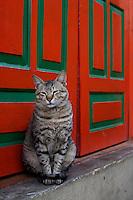 A cat at Boudhanath Kathmandu also known as little Tibet, Nepal