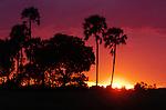 Sunset in the Okavango Delta in Botswana.