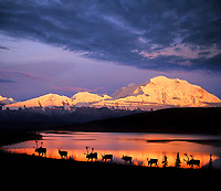 DIGITAL COMPOSITE IMAGE: Caribou, Wonder Lake, Alpenglow on north face of Denali, Denali National Park, Alaska