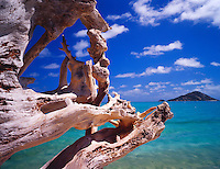 Natural Wood Sculpture on Shore of Blue Lagoon, Huge Snag Sculpted by Decades of Waves, Lizard Island National Park, Great Barrier Reef Marine Park, Australia