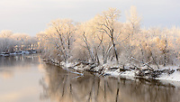 Spring snow covers trees along the Minnesota River in Bloomington.