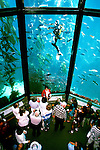 California: Monterey, Monterey Bay Aquarium, Photo: canner105.Photo copyright Lee Foster, 510/549-2202, lee@fostertravel.com, www.fostertravel.com