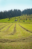 Golzern, Switzerland - rows of cut grass after the harvest.