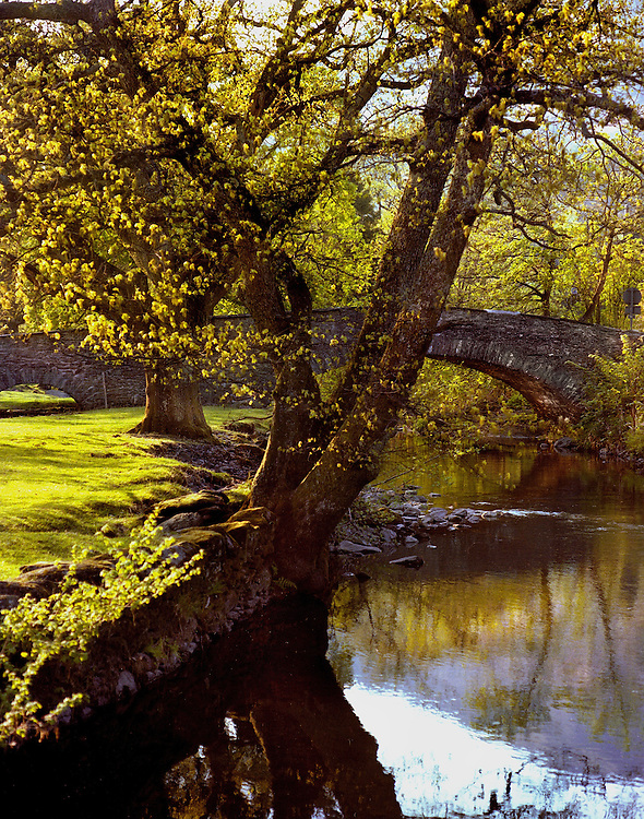 A countryside scene of trees by a riverbank