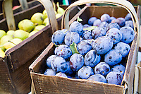 Fresh, local organic purple plums grown biodynamically by Laura Sabourin's Feast of Fields and on sale at Toronto's Dufferin Grove organic farmers market.