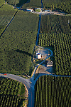 Aerial view or apple and cherry orchards in Bray's Landing Area of Douglas County, Washington.  June 2007
