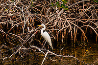 Bird, John Pennekamp Coral Reef State Park, Key Largo, Florida Keys, USA