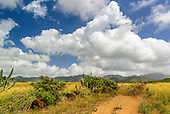 A dirt road leading into back country, set against a blue sky and puffy white clouds, Koloa, Kaua'i.