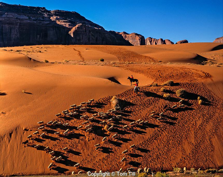 Sheep Descending Sand Dunes, Monument Valley Tribal Park, Arizona