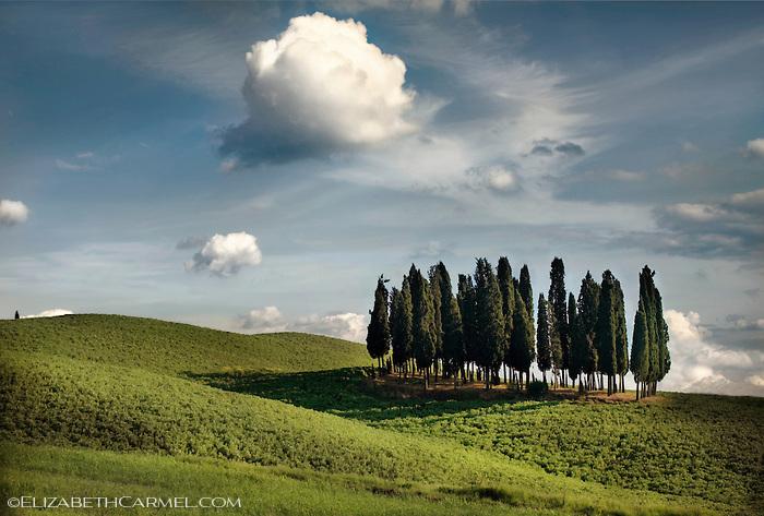 Cypress Gove, Tuscany