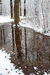 Forest and Water after Fresh Snowfall - Portrait