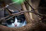 Feral kittens in Lahaina on the island of Maui, Hawaii, USA