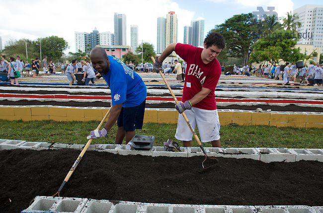 Jan. 6, 2013;  Students, Chris Jones from Notre Dame (left) and Ben Ward from the University of Alabama rake the soil in a garden bed. Volunteers from Notre Dame and the University of Alabama joined forces to build a garden in the Overtown neighborhood of Miami, Florida. The volunteers partnered with Roots in the City, an organization based in Overtown that promotes community development and beautification in inner-city areas. Photo by Barbara Johnston/University of Notre Dame