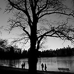 A big spooky tree silhouetted against Lost Lagoon, with 2 couples about to pass on either side.