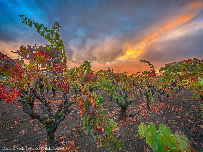 Autumn Glow, Napa Valley