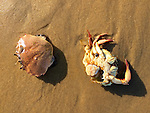 Dead Crabs On The Beach
