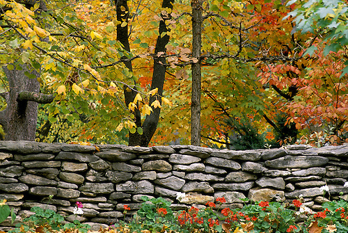 Stone wall with fall foliage