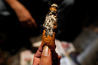 A Salvadorean 'brujo' (sorcerer) holds a burning cigar, predicting the future from shapes shown on the tobacco leaves, in a street fortune telling shop in San Salvador, El Salvador, 18 February 2014. Due to the strong historical tradition of using tobacco by indigenous shamen in Americas, nowadays, the reading of tobacco is one of the most most widespread methods of divination, employed by esoteric practitioners and healers in all Latin American countries. According to the shapes of burn leaves, colors of ash and smoke, burning velocity and other factors, the experienced fortune teller interprets the manifested signs in relation with the supposed future of people involved in the tobacco ritual.