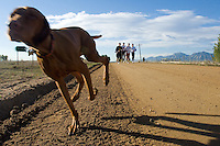 A dog named Frisco sprints ahead of his owner's running group at the Boulder Reservoir, Wednesday, Oct. 11, 2006. Boulder, Colo. is a mecca for runners due to a variety of terrain and altitudes available for training. (Kevin Moloney for the New York Times)