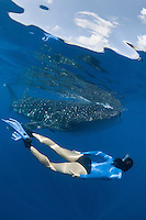 RX4039-D. Whale Shark (Rhincodon typus) swimming just under the surface while woman (model released) swims alongside the 25 foot gentle giant. For many people, encountering a whale shark is one of the top experiences in the sea. Gulf of Mexico, Mexico, Caribbean Sea.<br /> Photo Copyright &copy; Brandon Cole. All rights reserved worldwide.  www.brandoncole.com