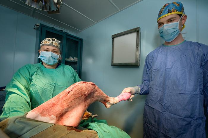 A Surgery on a dog at a Animal Hospital