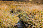 The marsh at Quivett Creek in Dennis, Cape Cod, MA, USA