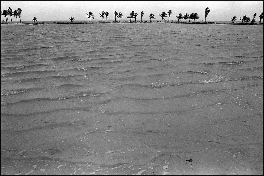 From &quot;Miami in Black and White&quot; series<br /> Matheson Hammock Park, Miami, FL