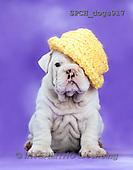 Animals - dogs  photos