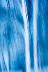 Paper birch trees abstract, Gorham, New Hampshire.