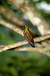 FL: Florida Everglades National Park,.hummingbird..Photo Copyright: Lee Foster, lee@fostertravel.com, www.fostertravel.com, (510) 549-2202.Image: flever242