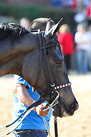 HOT SPRINGS, AR - March 18: Streamline #7 after winning the Azeri Stakes at Oaklawn Park on March 18, 2017 in Hot Springs, AR. (Photo by Ciara Bowen/Eclipse Sportswire/Getty Images)