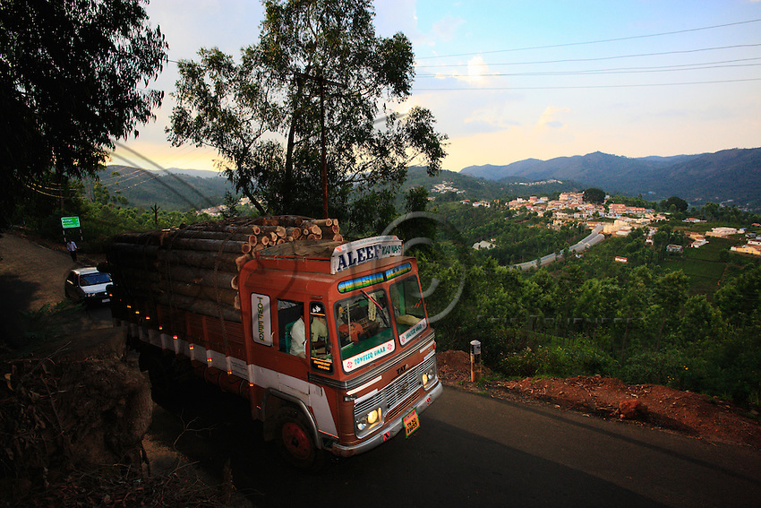 In Kotagiri and the Nilgiris, the and coffee are the main monoculture.
