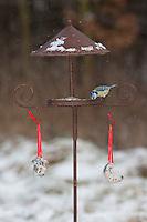 Blaumeise, an der Vogelfütterung, Fütterung im Winter bei Schnee, im mit Körnern gefüllten Futterhäuschen, Vogelhäuschen, Futterhaus, Vogelhaus, Winterfütterung, Blau-Meise, Meise, Cyanistes caeruleus, Parus caeruleus, blue tit